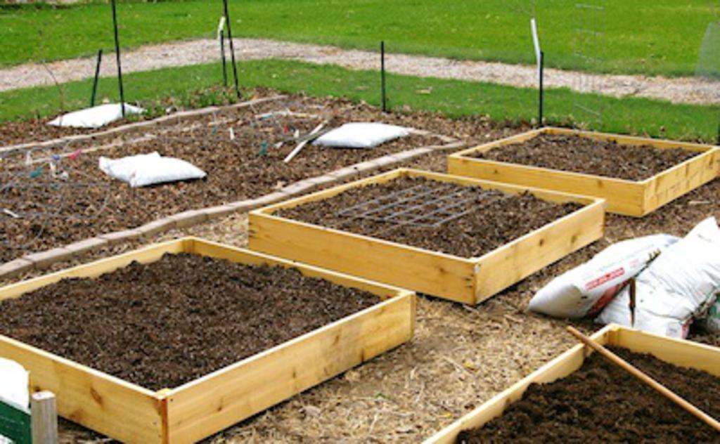 Suncoast co op for How to build raised garden beds